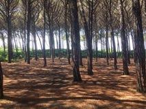 mistical的森林 图库摄影