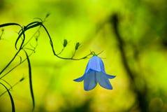 Mistical flower Stock Image
