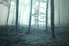 Mistical green saturated foggy forest landscape Stock Photos