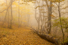 Mistical place in autumnal foggy forest Royalty Free Stock Image