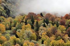 Mistig Autumn Forrest royalty-vrije stock fotografie
