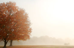 Mistig Autumn Landscape royalty-vrije stock foto