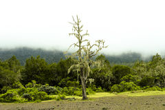 Mistig Bergregenwoud Tanzania Royalty-vrije Stock Fotografie