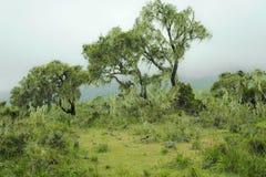 Mistig Bergregenwoud Tanzania Stock Afbeelding