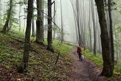 Mistig beukbos in de Karpatische bergen Stock Fotografie