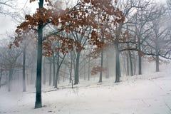 Mistig Bos 11 van de Winter Stock Afbeeldingen