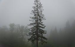 Mistig bos stock foto's