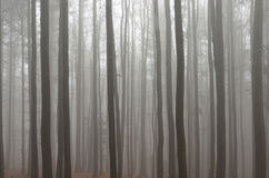 Mistig bos Stock Afbeelding