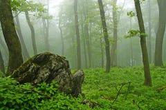 Mistig bos stock afbeeldingen