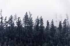 Mistig bos stock foto