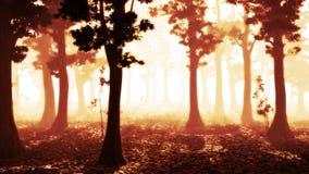 Mistig bos bij zonsopgang, vreedzame landschapsachtergrond Royalty-vrije Stock Foto's