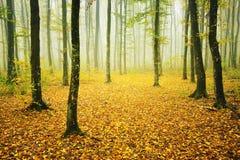 Mistig bos in de herfst stock afbeelding