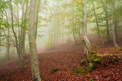Mistig bos in de herfst Royalty-vrije Stock Foto