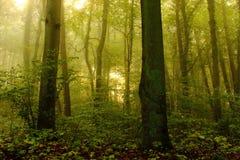 mistig bos in een zonnige ochtend Royalty-vrije Stock Afbeeldingen
