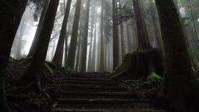 Mistig Bos in het Nationale Park van Alishan met Steenweg Het lopen onder nevelige cipresbomen in Taiwan De mening van het perspe stock video