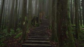 Mistig Bos in het Nationale Park van Alishan met Steenweg Het lopen onder nevelige cipresbomen in Taiwan De mening van het perspe stock videobeelden