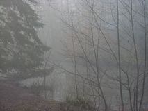 Mistig bos het overzien bosmeer Stock Fotografie