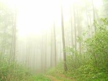 Mistig bos met naakte boomstammen Royalty-vrije Stock Afbeeldingen