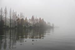 Mistig bos op het meer Royalty-vrije Stock Foto