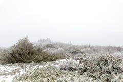 Mistig de winterlandschap Royalty-vrije Stock Afbeelding