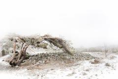 Mistig de winterlandschap Stock Foto