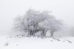 Mistig de winterlandschap in het bos Stock Foto's