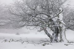 Mistig de winterlandschap in het bos Stock Afbeeldingen