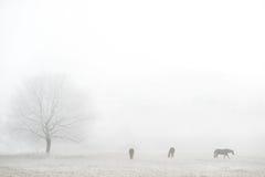 Mistig de winterlandschap met paardensilhouetten Royalty-vrije Stock Fotografie