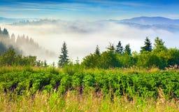 Mistig de zomerlandschap in bergen Stock Fotografie