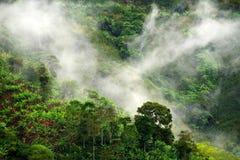 Mistig landschap in Buenavista, Quindio stock foto