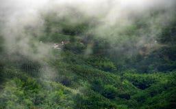 Mistig landschap in Buenavista, Quindio royalty-vrije stock foto