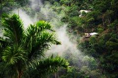Mistig landschap in Buenavista, Quindio royalty-vrije stock foto's