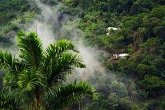 Mistig landschap in Buenavista, Quindio stock afbeeldingen