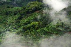 Mistig landschap in Buenavista, Quindio royalty-vrije stock fotografie