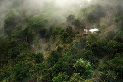 Mistig landschap in Buenavista, Quindio stock fotografie