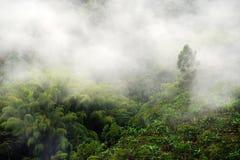 Mistig landschap in Buenavista, Quindio royalty-vrije stock afbeelding