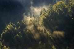 mistig landschap Nevelige ochtend in een vallei van het Boheemse park van Zwitserland Landschap van Tsjechische Republiek Royalty-vrije Stock Foto