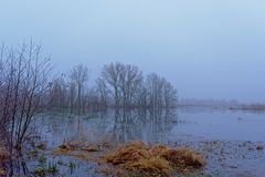 Mistig moeraslandlandschap met naakte bomen stock afbeelding