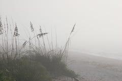 Mistig strand stock fotografie