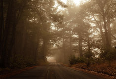 Mistige aandrijving door het bos Royalty-vrije Stock Foto