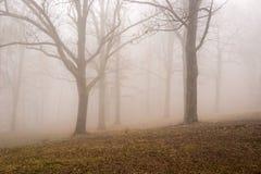 Mistige Bergbomen royalty-vrije stock fotografie