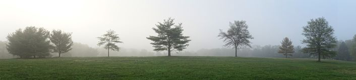 Mistige Bomen Stock Afbeelding