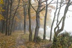 Mistige dag in een bos Royalty-vrije Stock Foto