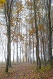 Mistige dag in een bos Royalty-vrije Stock Afbeelding