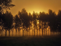 Mistige Dawn Stock Afbeeldingen