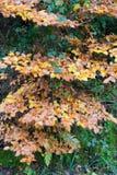 mistige de herfstbomen en bladeren Stock Fotografie