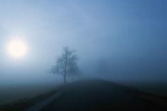 Mistige de winterochtend Stock Afbeeldingen