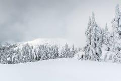 Mistige de winterscène in backcountry stock foto's