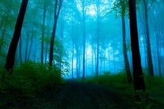 Mistige de zomerdag in het bos Stock Foto's