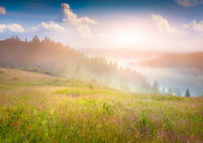 Mistige de zomerzonsopgang in bergen Stock Foto